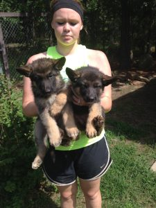 Xena and Xandra Winterx big puppies ready to go to a new home